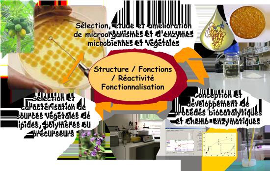 Mots-clés : agroressources – enzymes microbiennes et végétales
